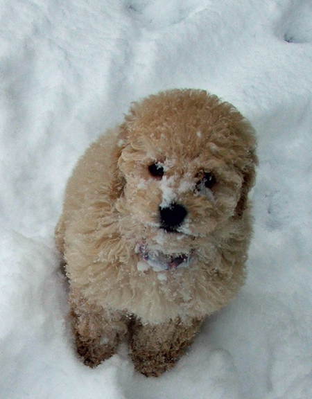 Trixie 1st Snow