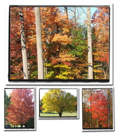 November_trees